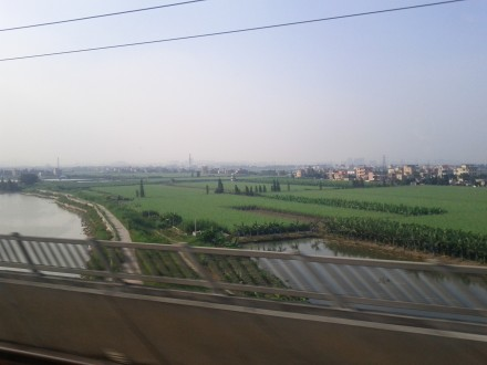 [passing by rice fields on the high speed train to Guangzhou]